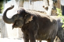 ZZ1-Zoo-Zuerich-26042012-Bodensee-Community_SEECHAT_DE-_162.jpg