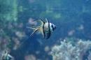 Zoo-Z_rich-26042012-Bodensee-Community-Seechat-de1.jpg