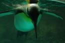 Zoo-Z_rich-26042012-Bodensee-Community-Seechat-de8.jpg