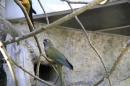 Zoo-Zuerich-26042012-Bodensee-Community_SEECHAT_DE-_02.jpg