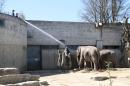 Zoo-Zuerich-26042012-Bodensee-Community_SEECHAT_DE-_101.jpg