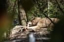 Zoo-Zuerich-26042012-Bodensee-Community_SEECHAT_DE-_102.jpg