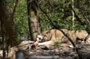 Zoo-Zuerich-26042012-Bodensee-Community_SEECHAT_DE-_103.jpg