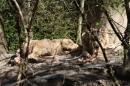 Zoo-Zuerich-26042012-Bodensee-Community_SEECHAT_DE-_105.jpg