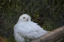 Zoo-Zuerich-26042012-Bodensee-Community_SEECHAT_DE-_116.jpg