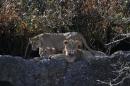 Zoo-Zuerich-26042012-Bodensee-Community_SEECHAT_DE-_118.jpg