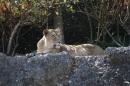 Zoo-Zuerich-26042012-Bodensee-Community_SEECHAT_DE-_122.jpg