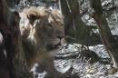Zoo-Zuerich-26042012-Bodensee-Community_SEECHAT_DE-_123.jpg