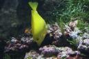 Zoo-Zuerich-26042012-Bodensee-Community_SEECHAT_DE-_131.jpg