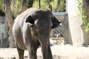 Zoo-Zuerich-26042012-Bodensee-Community_SEECHAT_DE-_97.jpg