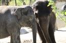 Zoo-Zuerich-26042012-Bodensee-Community_SEECHAT_DE-_99.jpg