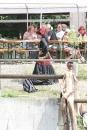 Criollos-Equitation-Hoffest-Gailingen-040812-Bodensee-Community-SEECHAT_DE-_603.JPG