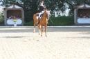 Bodenseereiter-Turnier-Radolfzell-09092012-Bodensee-Community-SEECHAT_DE-IMG_9400.JPG