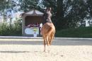 Bodenseereiter-Turnier-Radolfzell-09092012-Bodensee-Community-SEECHAT_DE-IMG_9406.JPG