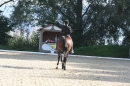 Bodenseereiter-Turnier-Radolfzell-09092012-Bodensee-Community-SEECHAT_DE-IMG_9458.JPG