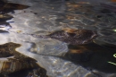 Sealife-Konstanz-231112-Bodensee-Community-SEECHAT_DE-_17.jpg
