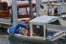 Dampfboot-Rennen-Bodman-01-06-2013-Bodensee-Community-SEECHAT_de-_134.jpg