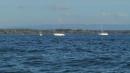 Interboot-2013-Messe-Friedrichshafen-Bodensee-Community-SEECHAT_DE-11010018.JPG