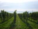 Tag-der-deutschen-Einheit-Meersburg-031013-Bodensee-Community-SEECHAT_DE-P1000006.JPG