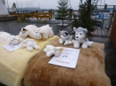 Bodensee-Community-Treffen-Weihnachtsmarkt-Konstanz-141213-SEECHAT_DE-P1000636.JPG
