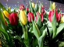 KARLSRUHE-art-140312-12-03-2014-Bodenseecommunity-seechat_de-DSCF4412.JPG