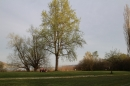 Naturschutzgebiet-Bodman-Ludwigshafen-7-4-14-Bodensee-Community-SEECHAT_DE-IMG_2143.JPG