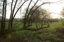 Naturschutzgebiet-Bodman-Ludwigshafen-7-4-14-Bodensee-Community-SEECHAT_DE-IMG_2150.JPG