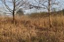 Naturschutzgebiet-Bodman-Ludwigshafen-7-4-14-Bodensee-Community-SEECHAT_DE-IMG_2154.JPG