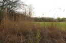 Naturschutzgebiet-Bodman-Ludwigshafen-7-4-14-Bodensee-Community-SEECHAT_DE-IMG_2155.JPG
