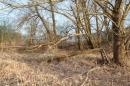 Naturschutzgebiet-Bodman-Ludwigshafen-7-4-14-Bodensee-Community-SEECHAT_DE-IMG_2156.JPG