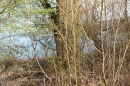 Naturschutzgebiet-Bodman-Ludwigshafen-7-4-14-Bodensee-Community-SEECHAT_DE-IMG_2163.JPG