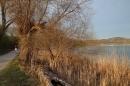 Naturschutzgebiet-Bodman-Ludwigshafen-7-4-14-Bodensee-Community-SEECHAT_DE-IMG_2189.JPG