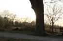 Naturschutzgebiet-Bodman-Ludwigshafen-7-4-14-Bodensee-Community-SEECHAT_DE-IMG_2196.JPG
