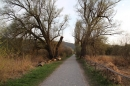 Naturschutzgebiet-Bodman-Ludwigshafen-7-4-14-Bodensee-Community-SEECHAT_DE-IMG_2197.JPG