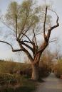 Naturschutzgebiet-Bodman-Ludwigshafen-7-4-14-Bodensee-Community-SEECHAT_DE-IMG_2199.JPG