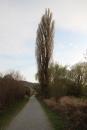 Naturschutzgebiet-Bodman-Ludwigshafen-7-4-14-Bodensee-Community-SEECHAT_DE-IMG_2201.JPG
