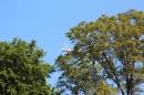 Mammut-Flossrennen-Sitter-Thur-18-05-2014-Bodensee-Community-SEECHAT_CH-IMG_5615.JPG