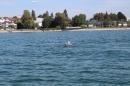 Bodenseequerung-Peggy-Hennings-Friedrichshafen-12915-Bodensee-Community-SEECHAT_DE-IMG_2557.JPG