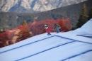 Cross_Skiweltcup-171216-Schruns-seecht_de-Ski_Cross_Weltcup_171216-0032.jpg