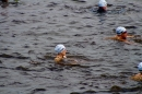 Wassersport-Hamburg-2017-07-15-Bodensee-Community-SEECHAT_DE-_59_.jpg