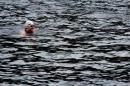 Wassersport-Hamburg-2017-07-15-Bodensee-Community-SEECHAT_DE-_8_.jpg