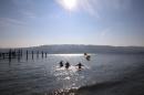 Eisschwimmen-Bodman-2018-02-24-Bodensee-Community-SEECHAT_DE-IMG_3775.JPG