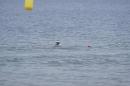 Eisschwimmen-Bodman-2018-02-24-Bodensee-Community-SEECHAT_DE-_69_.JPG