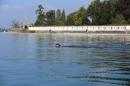 BODENSEEBOOT-Schwimmen-Katja-Rauch-2018-09-05-Bodensee-Community-SEECHAT_DE-IMG_1556.JPG
