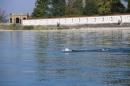 BODENSEEBOOT-Schwimmen-Katja-Rauch-2018-09-05-Bodensee-Community-SEECHAT_DE-IMG_1557.JPG