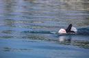 BODENSEEBOOT-Schwimmen-Katja-Rauch-2018-09-05-Bodensee-Community-SEECHAT_DE-IMG_1562.JPG