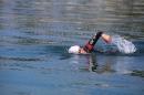 BODENSEEBOOT-Schwimmen-Katja-Rauch-2018-09-05-Bodensee-Community-SEECHAT_DE-IMG_1563.JPG