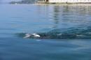 BODENSEEBOOT-Schwimmen-Katja-Rauch-2018-09-05-Bodensee-Community-SEECHAT_DE-IMG_1566.JPG