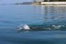 BODENSEEBOOT-Schwimmen-Katja-Rauch-2018-09-05-Bodensee-Community-SEECHAT_DE-IMG_1567.JPG