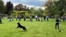 Hundeshow-Rorschach-2019-05-19-Bodensee-Community-SEECHAT_DE-_10_.jpg